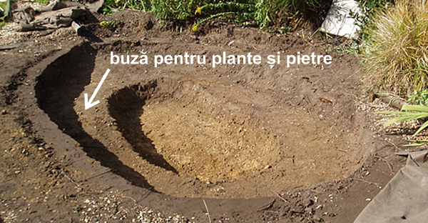 buza-plante-si-pietre