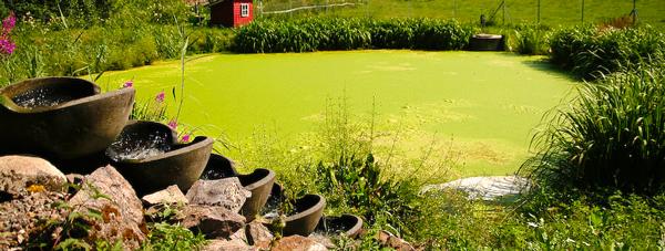 iaz-cu-alge