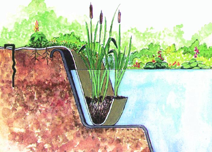 Accesorii pentru plante de iaz